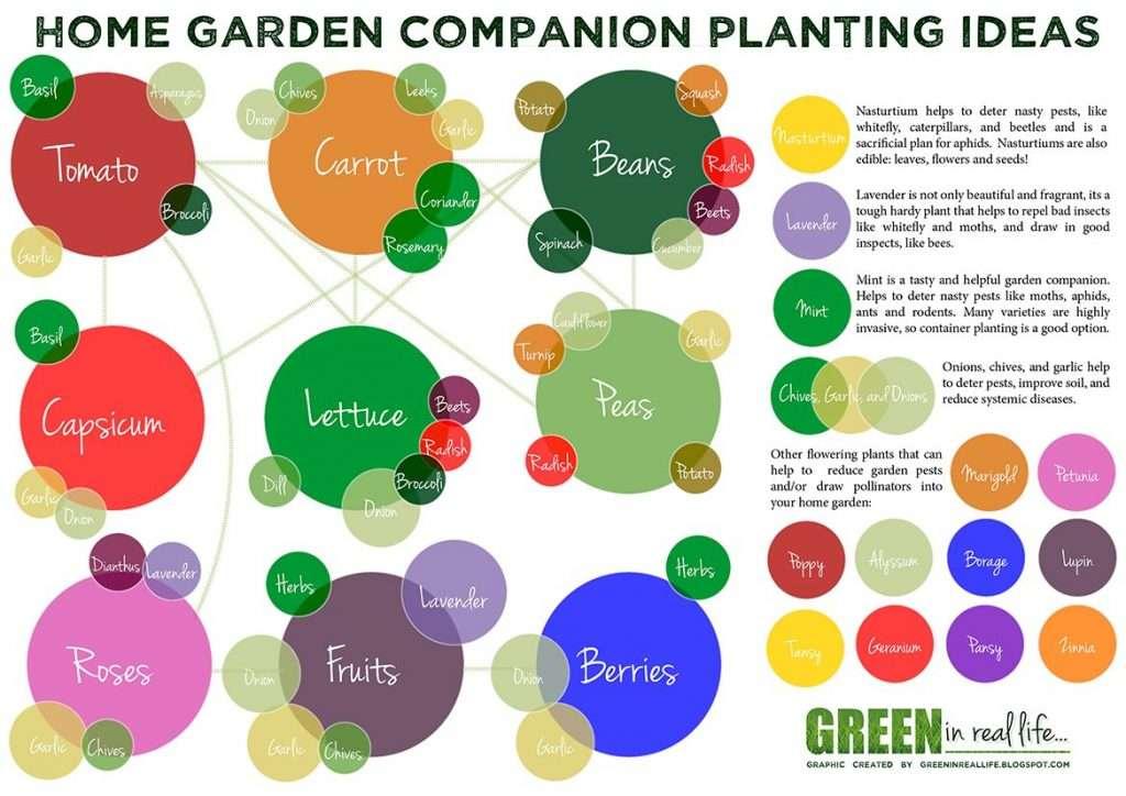 Home garden companion planting ideas