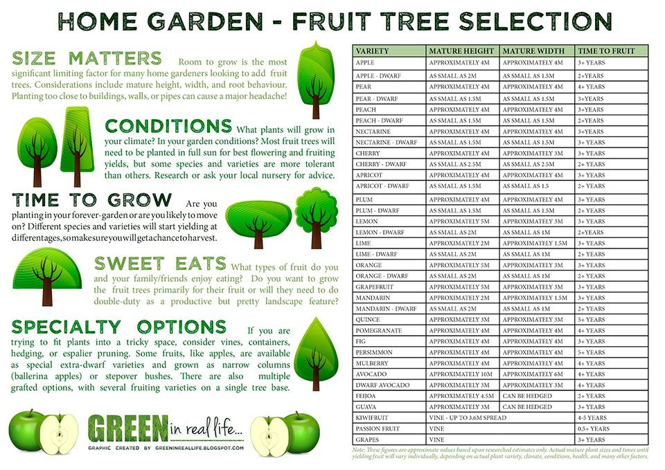 Home garden fruit tree selection and planting ideas