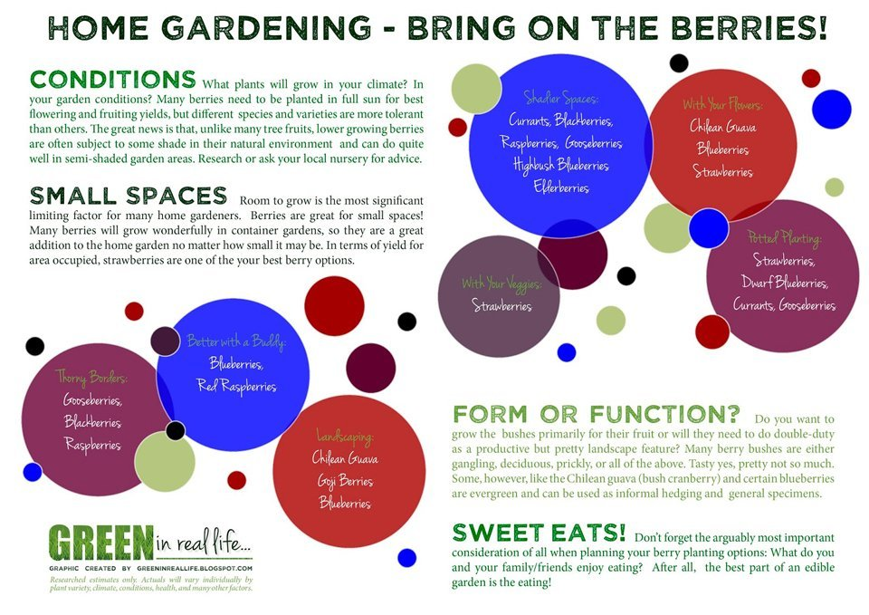 Home garden berry patch planting ideas