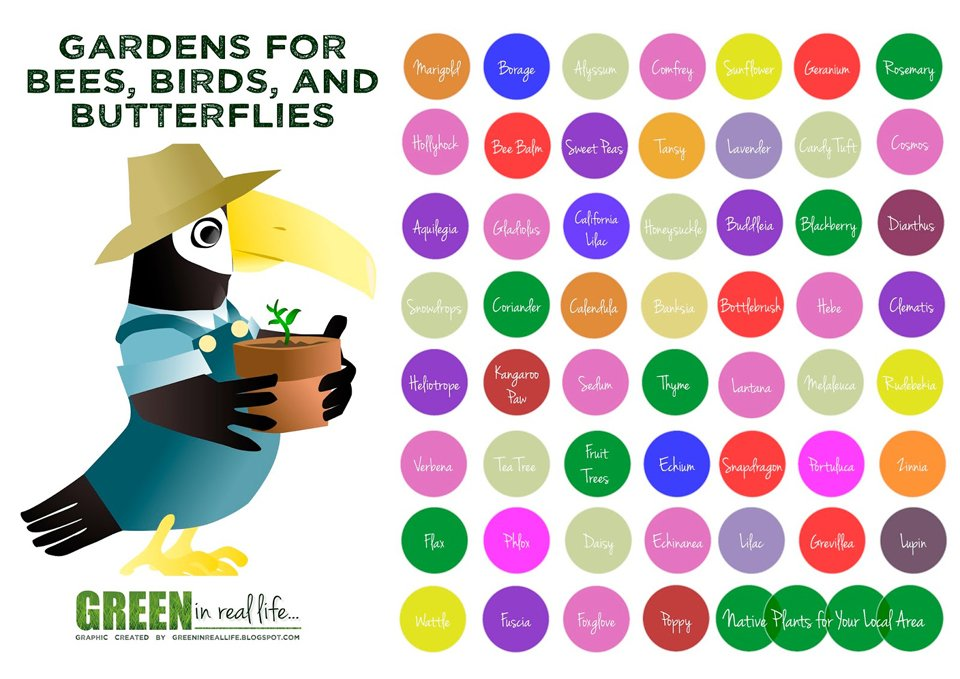 Home garden bee, bird, and butterfly-friendly planting ideas