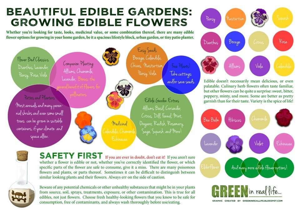 Home garden edible flower planting ideas