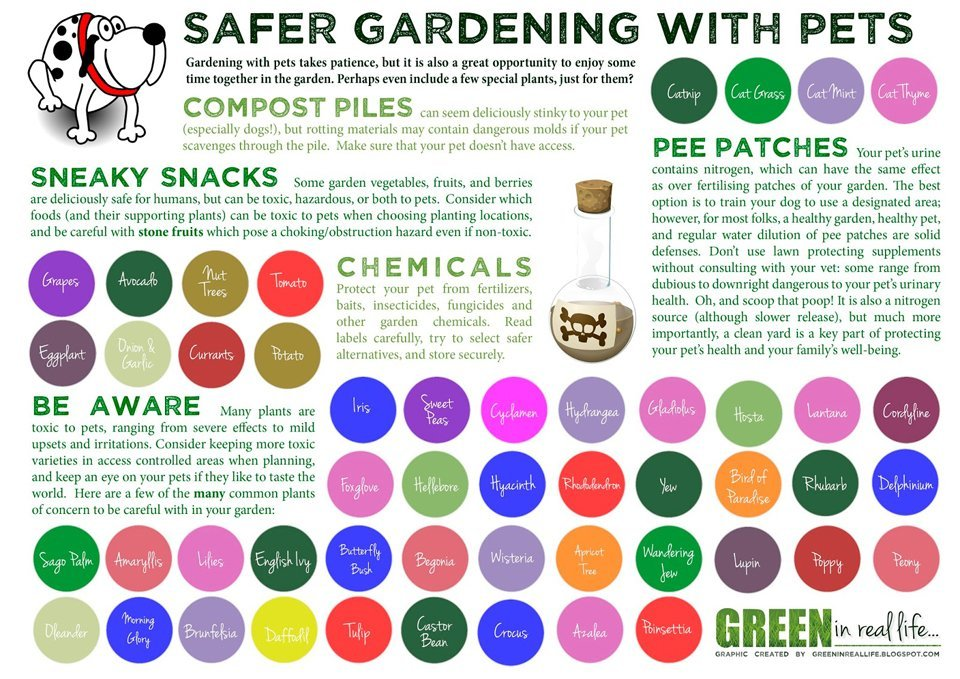 Home garden pet-safety and pet-friendly gardening ideas