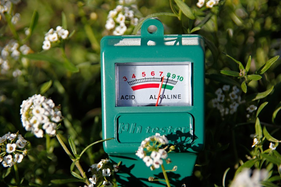 DIY soil pH tester in a garden bed
