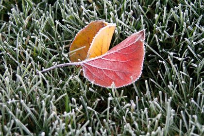 Frost on fallen leaves and grass