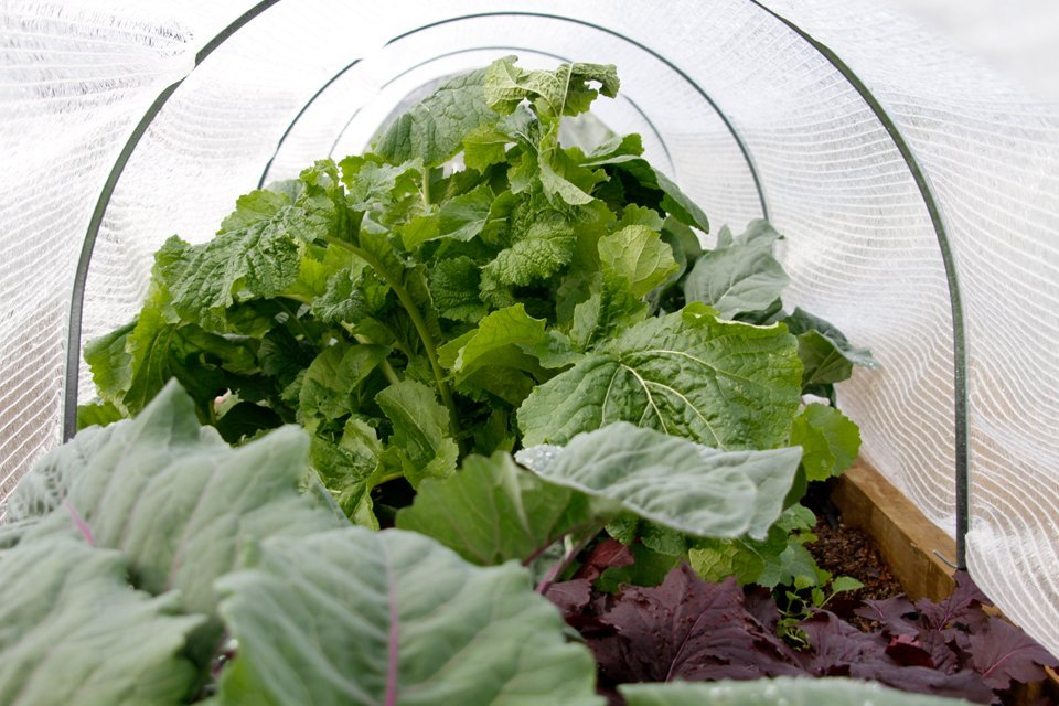 Raised vegetable garden beds covered in frost cloth on metal hoops