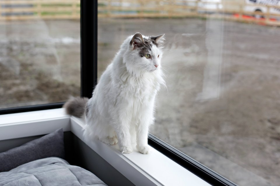 Cat sitting on windowsill looking at new muddy garden