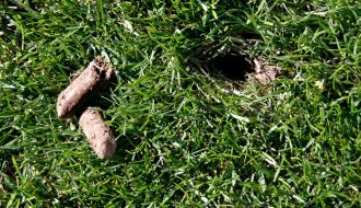 Hole in ground and plugs of dirt from lawn core aeration