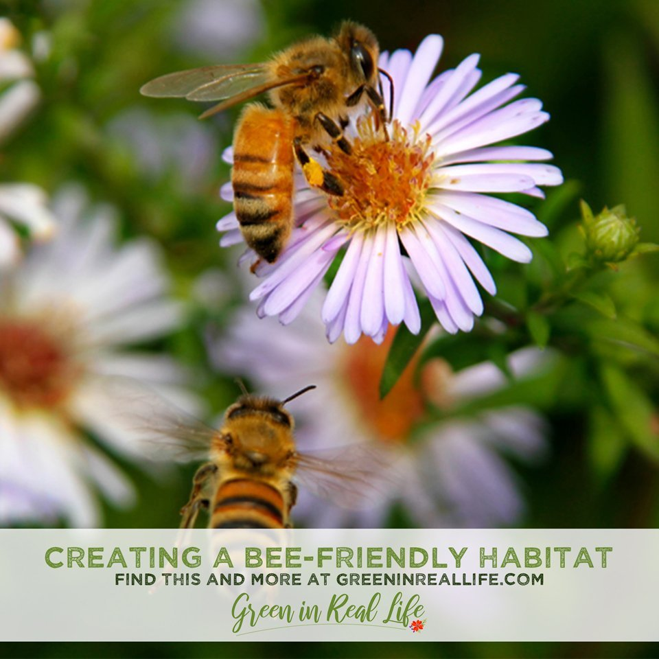 Creating a Bee-Friendly Habitat in the Home Garden