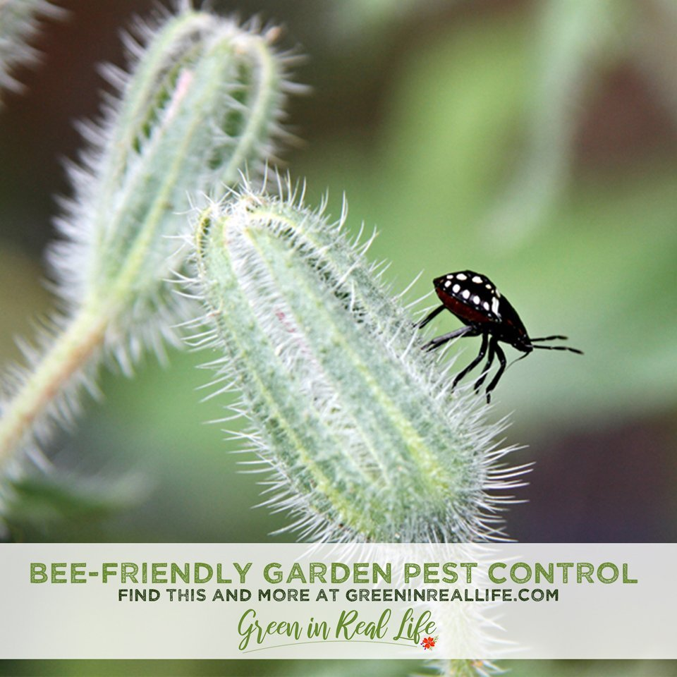 Bee-Friendly Gardening Controlling Pests without Harming Bees