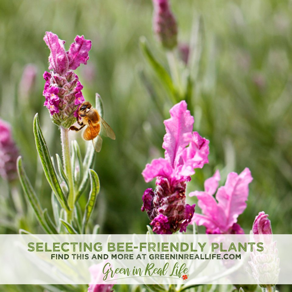 Selecting Garden Plants to Attract and Benefit Bees