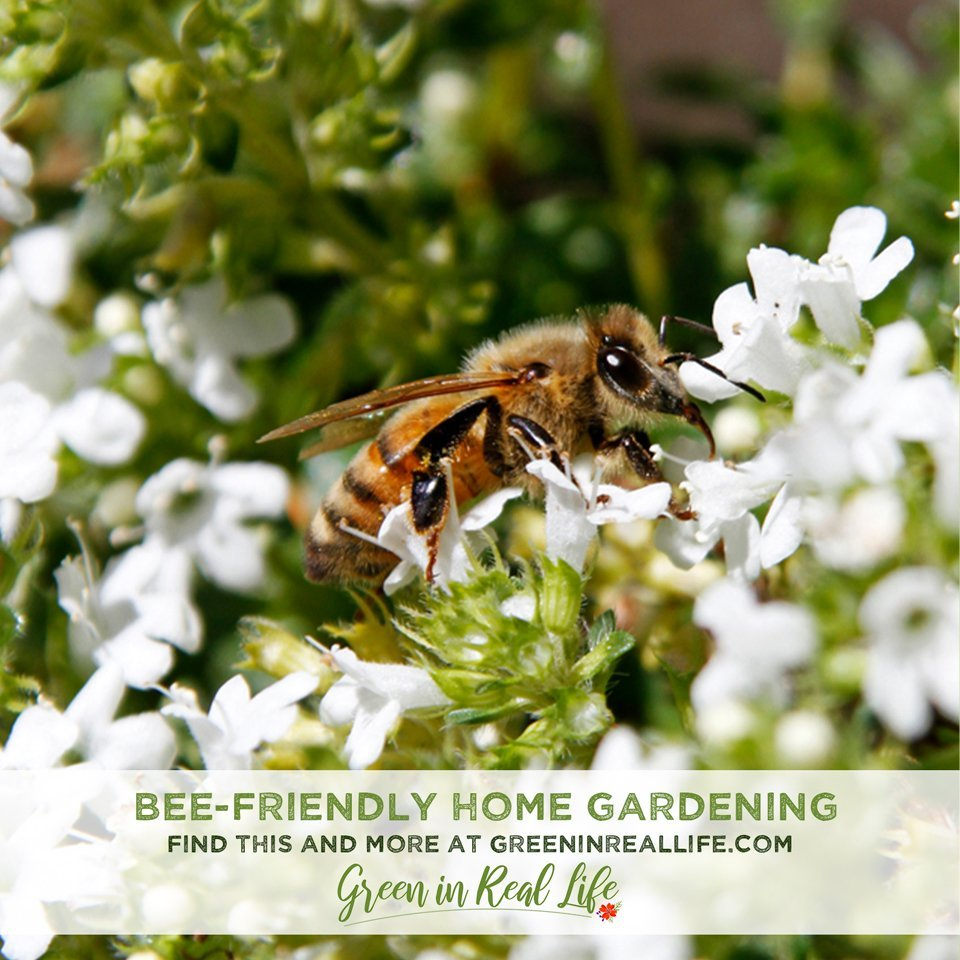 Bee-Friendly Gardening Tips and Lessons Learned