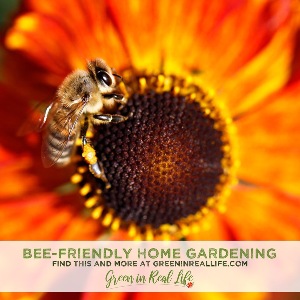 Bee Awareness Month Buzz: Bee-Friendly Gardening