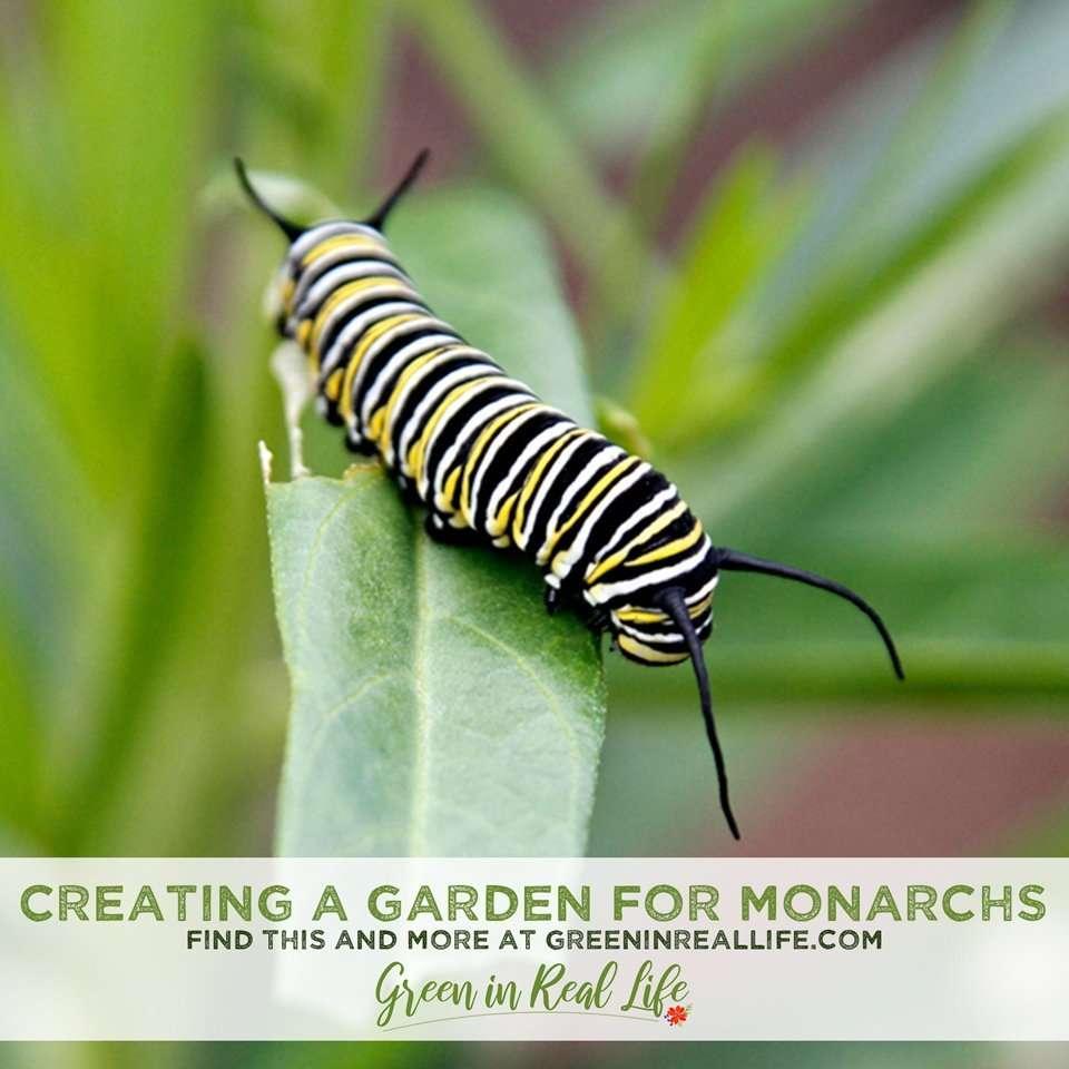 Creating a Monarch Friendly Home Garden