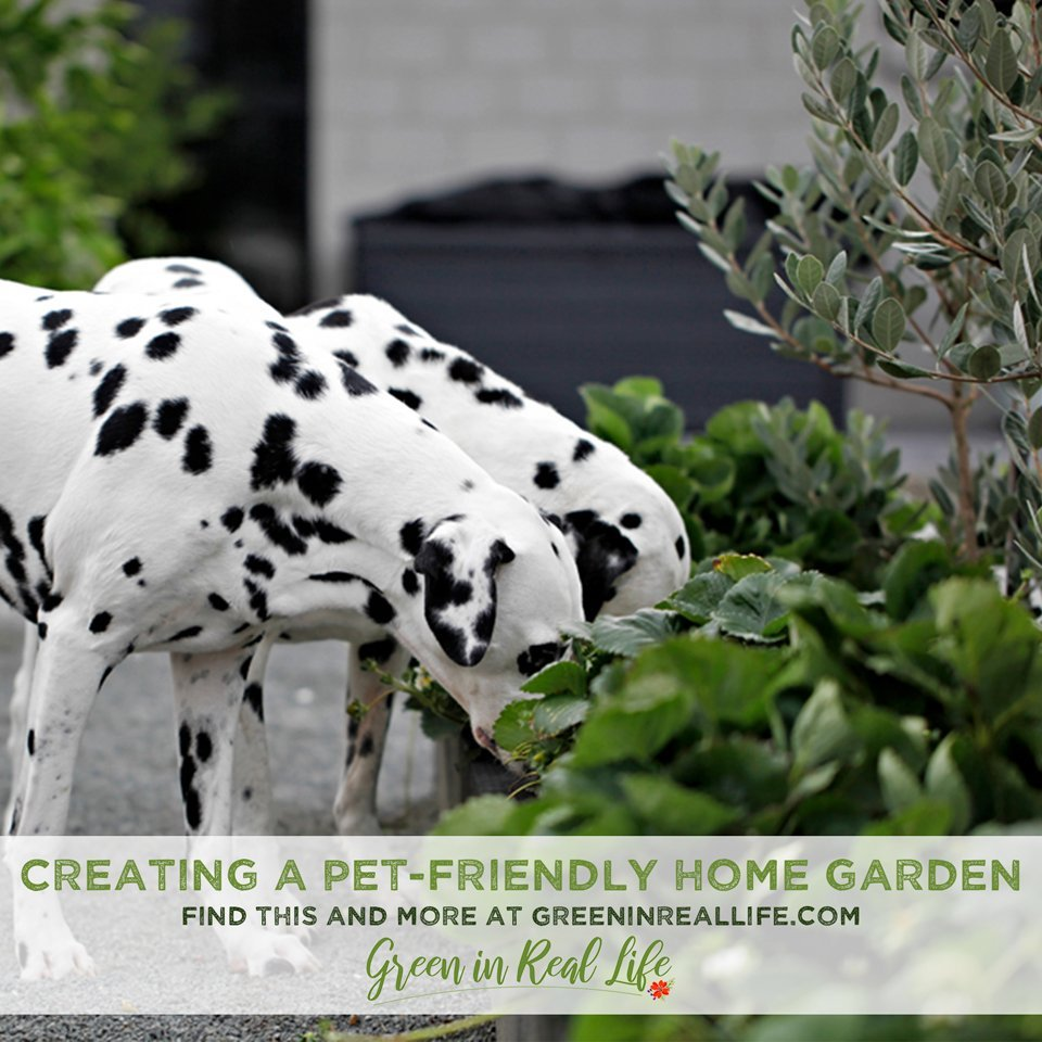 Planning and Planting a Pet-Friendly Garden