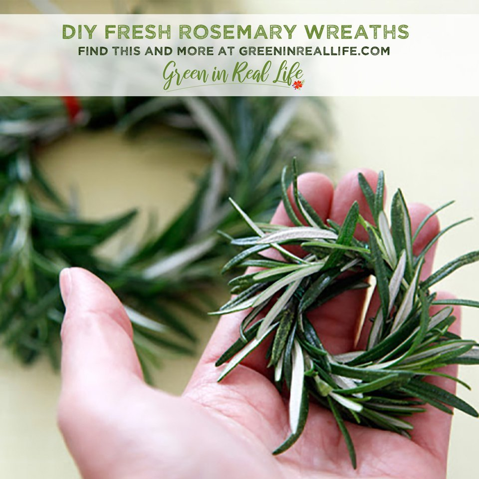 DIY Fresh Rosemary Wreaths and Mini-Wreaths