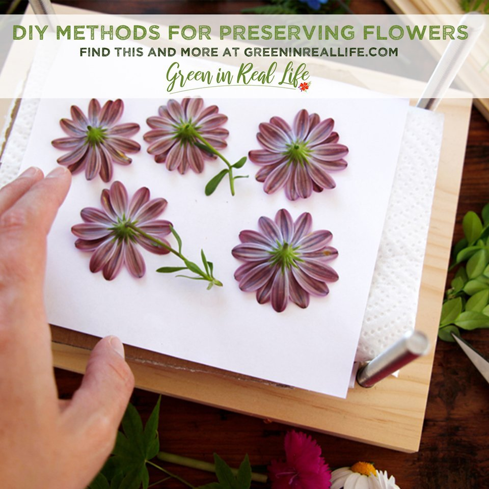 DIY Methods for Preserving Leaves and Flowers