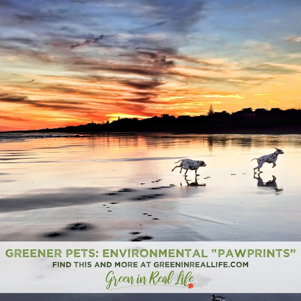 Greener Pets: Reducing our Environmental Pawprint