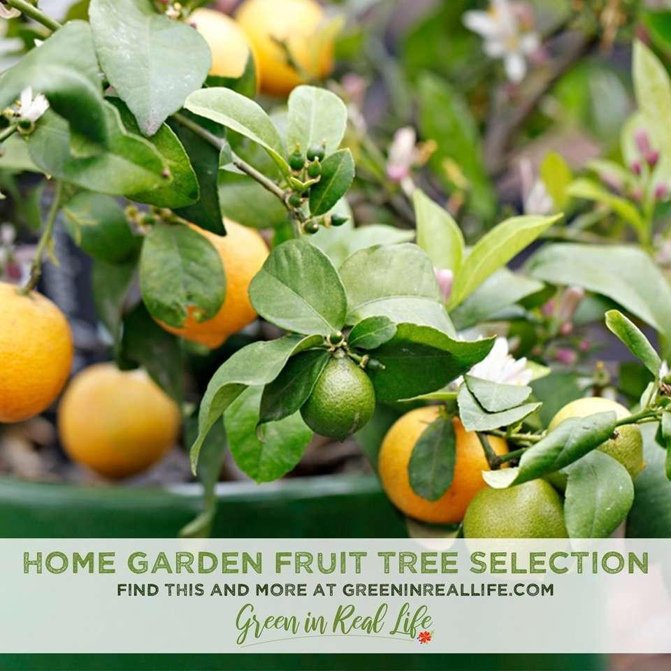 Home Garden Fruit Tree Selection