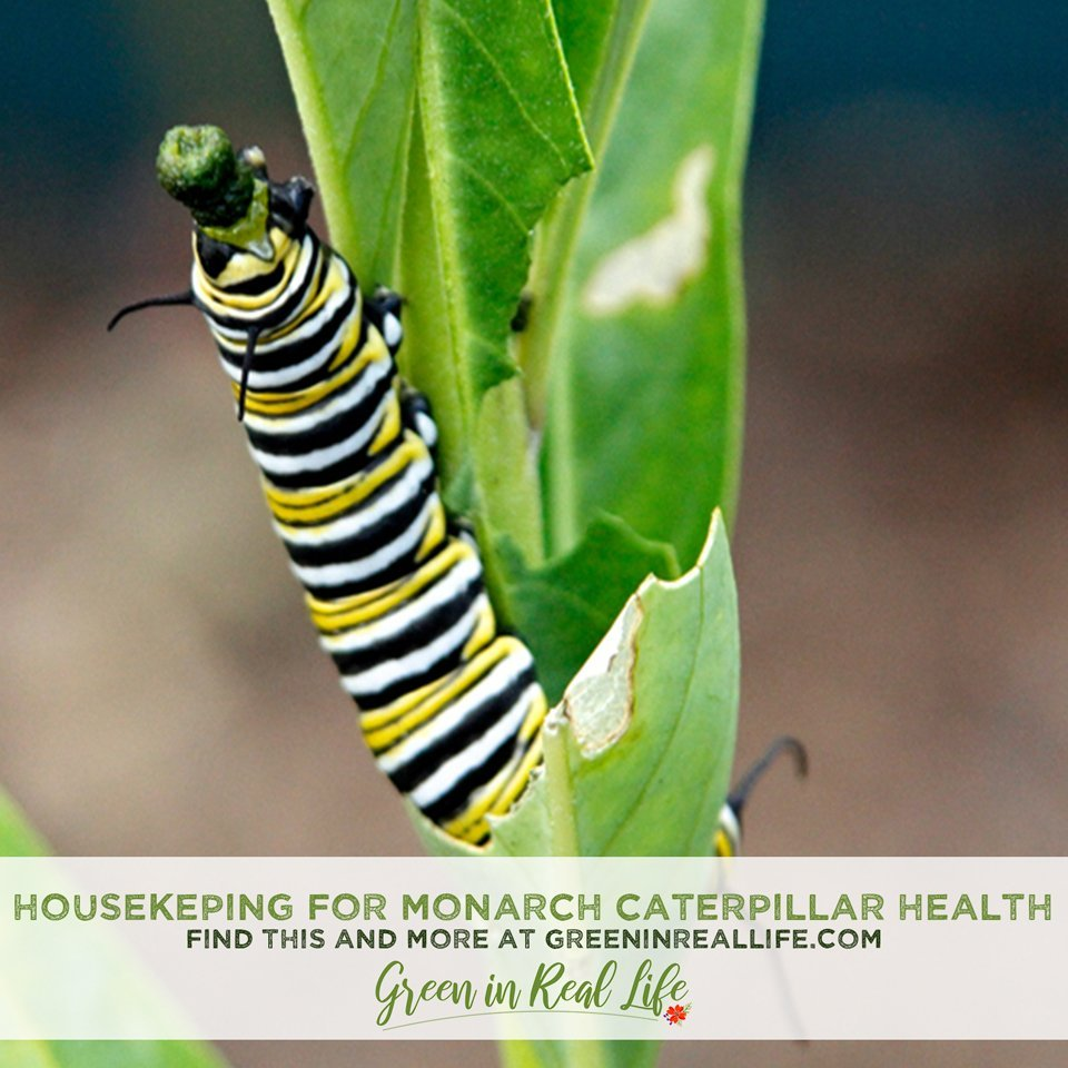 Housekeeping for Monarch Caterpillar Health