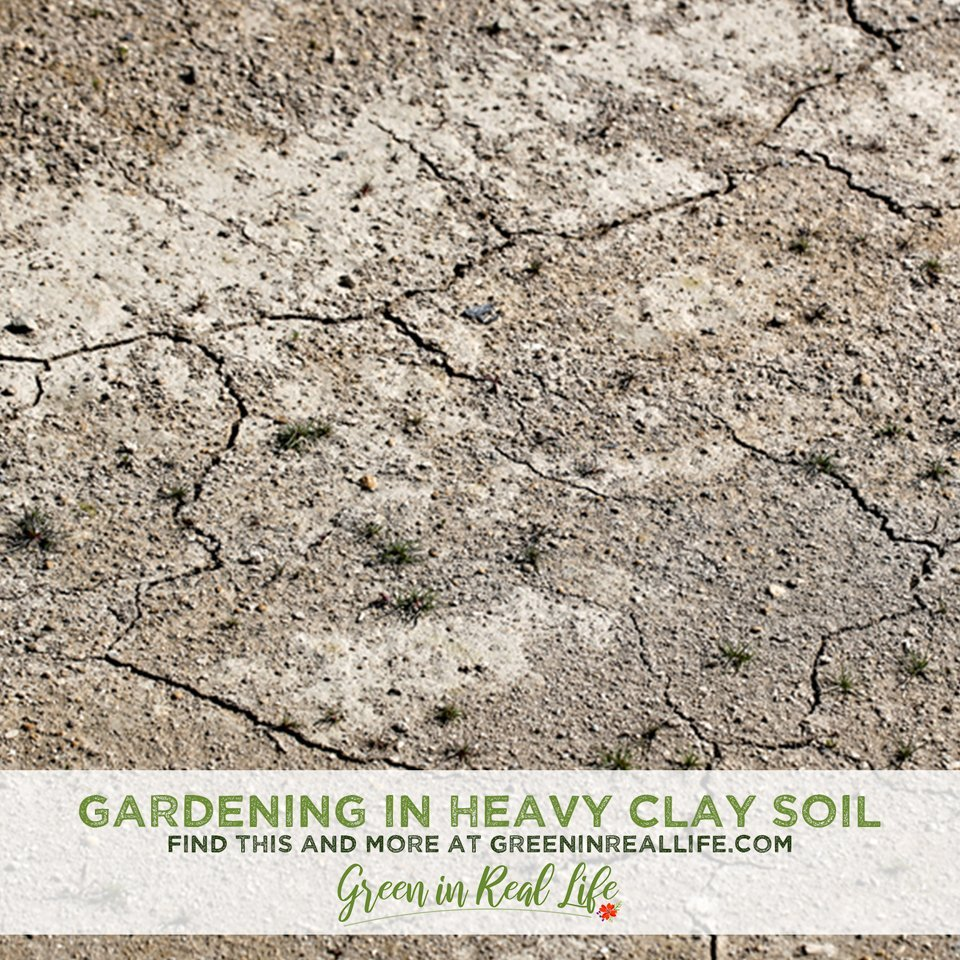 Perils and Plans for Gardening in Heavy Clay Soil