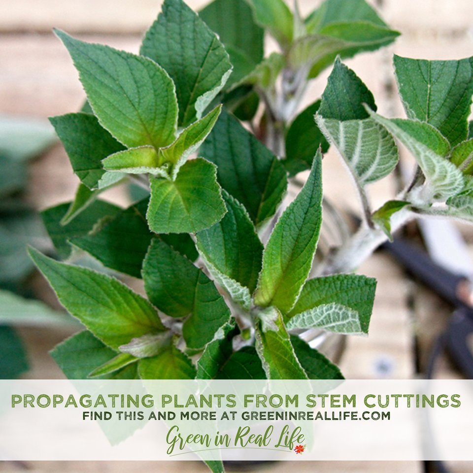 Tips for Propagating from Stem Cuttings