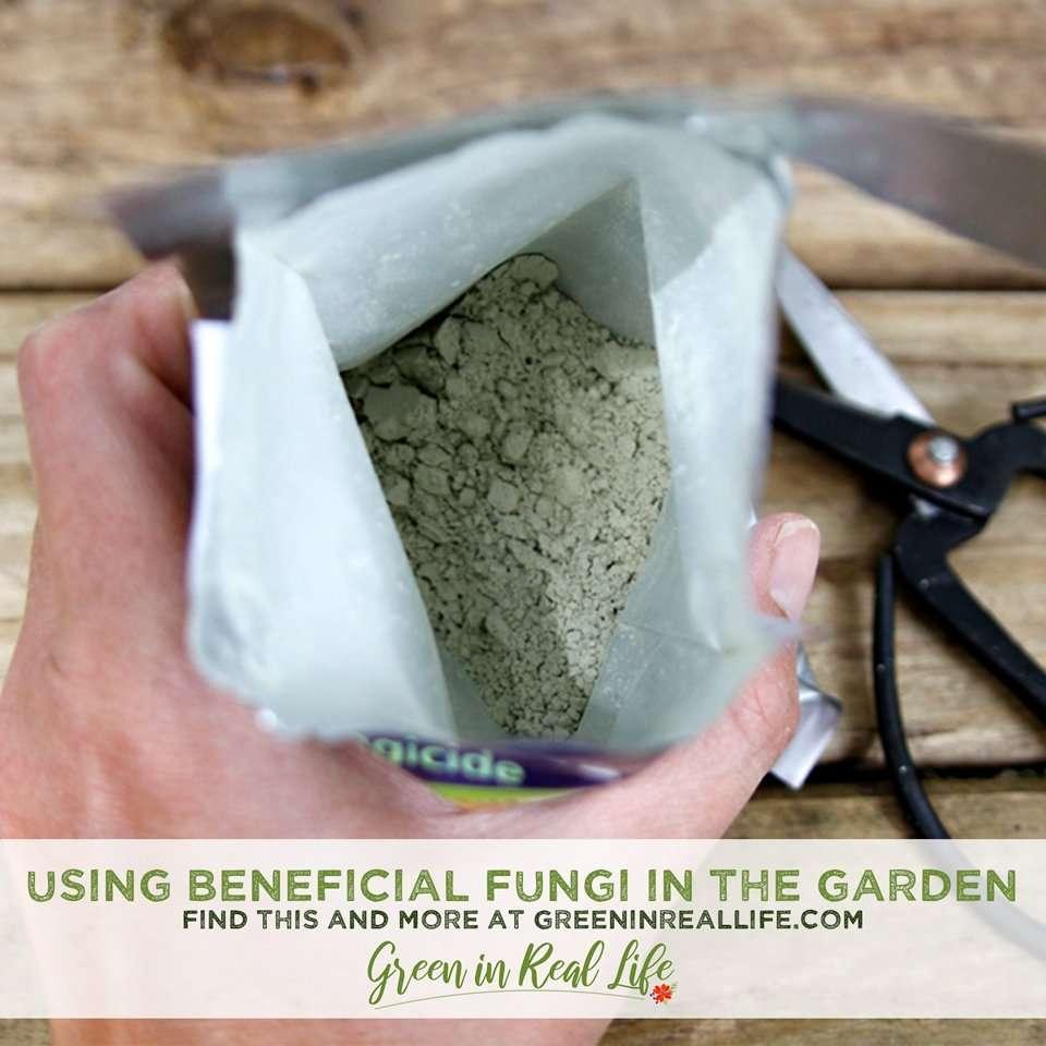 Using Beneficial Fungi to Improve Garden Health