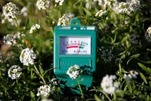 DIY soil pH tester in garden bed