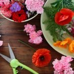 Colourful mixture of cut flowers on wooden table with garden snips