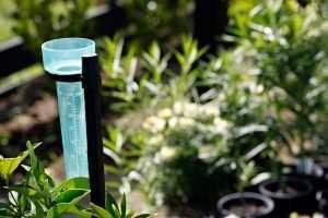 Empty rain gauge on a post in sunny garden