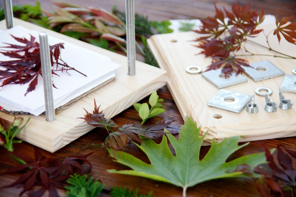 Pressing autumn leaves in a homemade wooden flower press