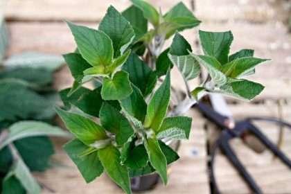 Stem cuttings on garden potting bench