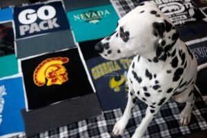 Dalmatian dog sitting on recycled t-shirt quilt squares