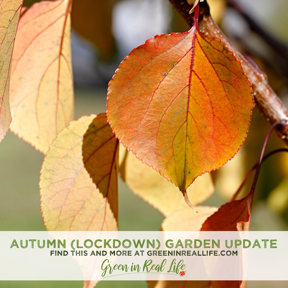 Autumn Lockdown Garden Update