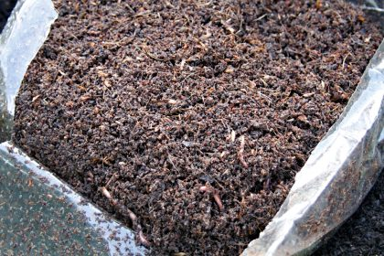 Worm farming and vermicomposting