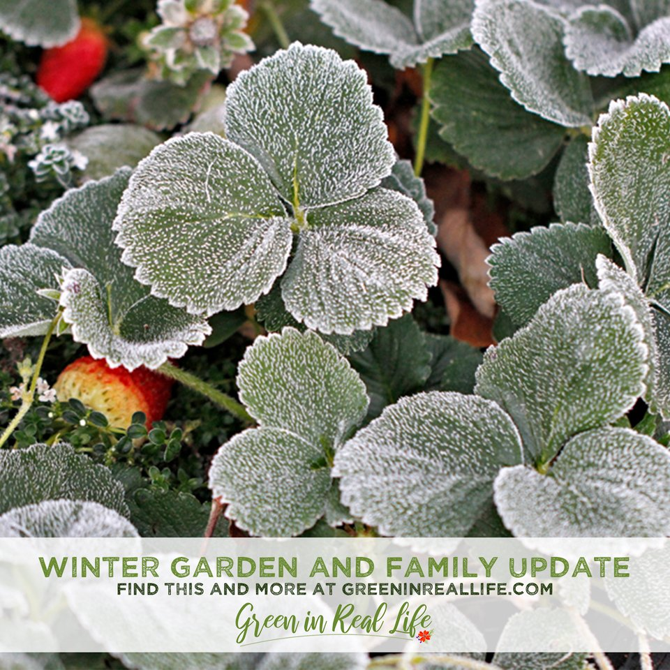 Green in Real Life winter 2020 garden update and family news