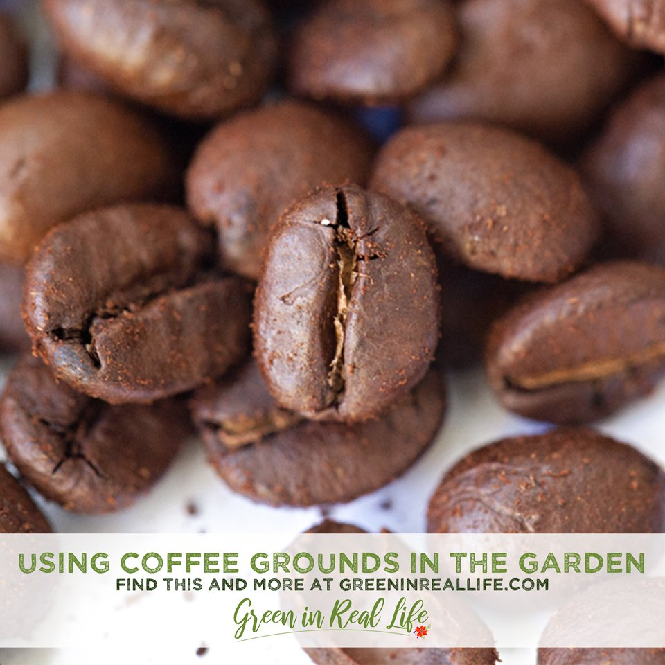 Procs cons and methods for using coffee grounds in the home garden
