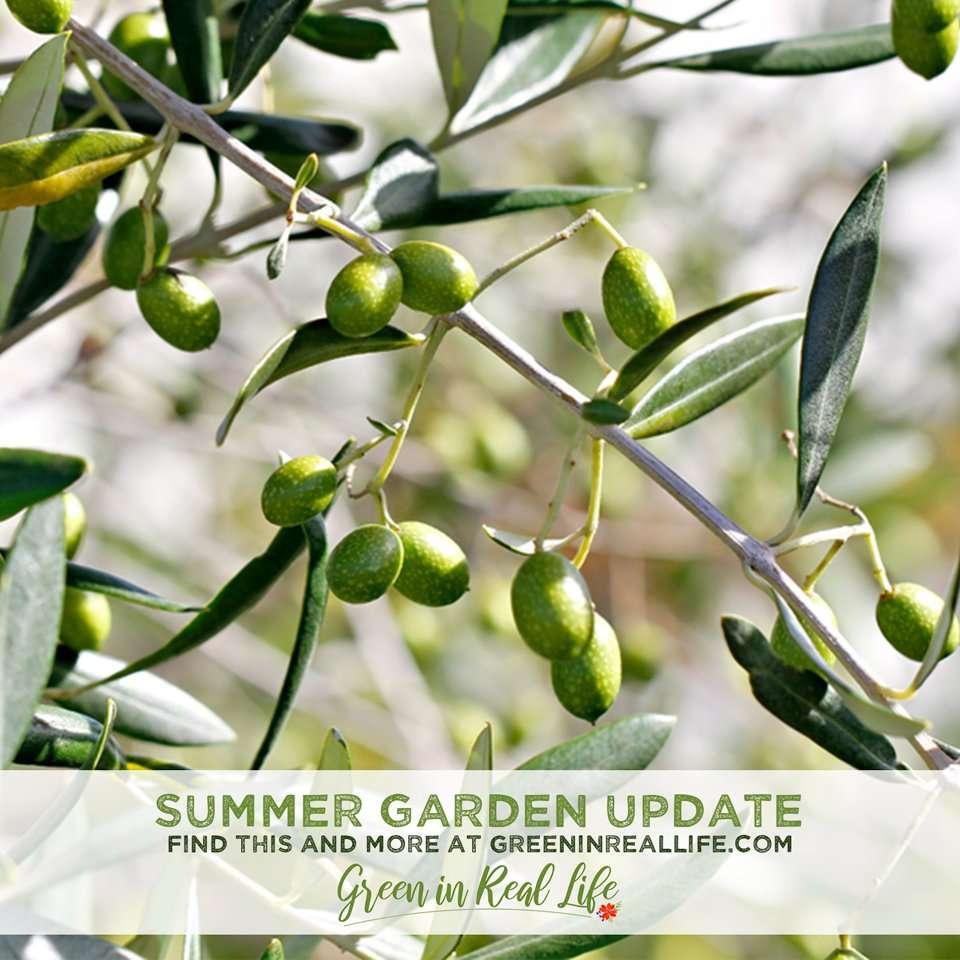 Green in Real Life blog summer 2020/21 seasonal garden update