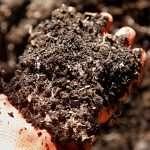 Handful of raised garden bed soil
