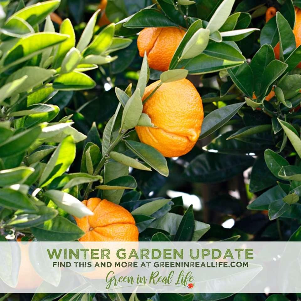 Green in Real Life winter 2021 garden update